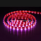 SMD aprovado pela UL5060 30 LEDs RGB LED Strip