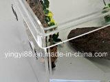 Nuevo fabricante de acrílico de Shenzhen de la jaula del terrario del reptil