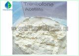 Tren a Bulking Cycle Revalor-H Steroids Trenbolone Acetate Powder