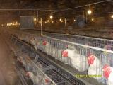 Chambre de poulet de couche avec des matériels