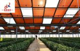고품질을%s 가진 광전지 농업 온실