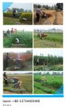 Mini moissonneuse de Individu-Marche/Swather/Reaper de riz