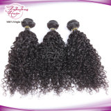 Doppelter Einschlagfaden-verschüttende freie brasilianische lockiges Haar-Extensionen
