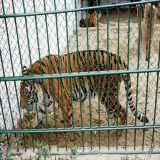 El Zoo de seguro/animal/valla con malla de alambre de acero inoxidable