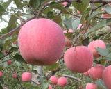 Fushi Apple