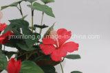 Fleurs de soie Décoration Hibicus pour la maison