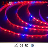 fabbrica dell'indicatore luminoso di striscia di Growlight Red+Blue della pianta di 12W/M LED