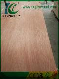 Grado 18m m de la madera contrachapada BB/CC de Bintangor para el mercado de Dubai
