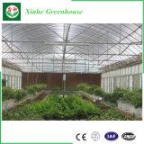 식물성 과일과 꽃 설치를 위한 정원 갱도 온실