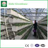 Invernadero arqueado agrícola del Muti-Palmo de la hoja de la PC