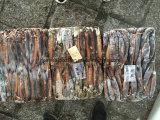 Gefrorene Argentinien-Kalmar-Größe 32