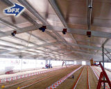 Senegal Prefabricated Light Weight Steel Frame Poultry House/Chicken Building