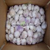 Migliore qualità Garlics fresco del nuovo raccolto 2018