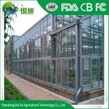 Multi-Span serre en verre avec système hydroponique pour l'Agriculture