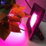 昇進の防水IP67穂軸完全なスペクトル50のワットLEDはライトを育てる
