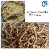 Kalmeert het Ruwe Poeder van Nootropics het Uittreksel van Polygala Tenuifolia van de Mening