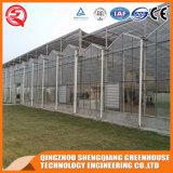 Garten-grünes Glashaus China-Venlo