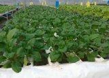 100g 물 처리를 설치하는 식물성 물을%s 최고 농업 오존 발생기 오존 발전기