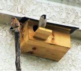حافظ خارجيّة خشبيّة عصفور منازل