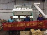 [هونس] [كست-برفورمنس] عال حادّة خداع الصين صاحب مصنع شاش لون فرّاز