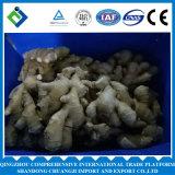 Qualitäts-organischer frischer Ingwer für Verkauf