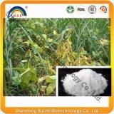 Polvo de la estaquiosa de la fuente de la fábrica del GMP/de la estaquiosa de la rafinosa/del tetrahidrato de la estaquiosa