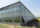الدفيئة رخيصة زجاجيّة لأنّ زراعة/إستعمال تجاريّة