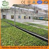 Sistema de irrigação do gotejamento da economia da água da estufa