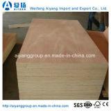 Peuplier/contre-plaqué commercial faisceau Okume/Bintangor/Sapeli d'eucalyptus pour les meubles/décoration