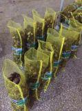 Таро профессионального нового урожая свежее (60-80g)