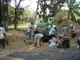 ディーゼル機関のムギの水田の脱穀機