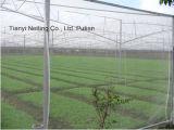 Anti rete della grandine di agricoltura