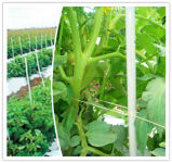 Vineyard Support Stake Corrosion Resistance FRP Pole / Rod