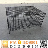 Reproducción de aves Casa en venta en China