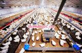 Costruzione personalizzata della Camera del pollame con il materiale della struttura del blocco per grafici d'acciaio e la strumentazione automatica