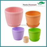 カラーSucculents (KD7121N-KD7125N)のためのプラスチック植木鉢