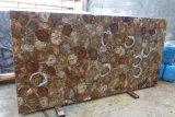 Les dalles de bois fossiles naturelles Les dalles polies de qualité