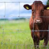 牛は塀か農場の塀中国製囲ったりまたは動物のためのヒツジの塀またはシカの