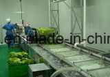 Plantaardige Wasmachine/het Plantaardige Schoonmaken Machine