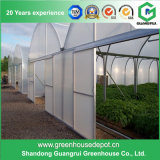 Commercial and Multi-Span Tunnel Greenhouse for Cucumber Growing