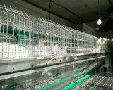 Equipo automatizado de la jaula del envase del conejo