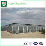 Hoja de PC de Gases de Efecto con el sistema hidropónico para plantar