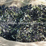 Réseau olive de moisson de PE de Vierge avec les additifs UV (YHZ-HON05)