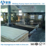 High Quality, Phenolic Glue Film Faced Plywood for Construction Application