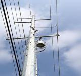 Heißes BAD Q345 galvanisierte Übertragung und Verteilung Polen