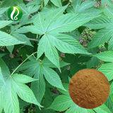 100% naturel extrait de feuilles de thé sucré Rubusoside 70 %