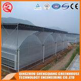 Mylar tradizionale agricolo coltiva serra di verdure/del pianta della tenda