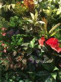 Alta calidad del helecho artificial y de otros arbustos Cymera_201 de las plantas