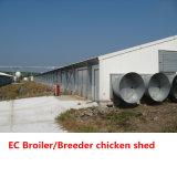Chambre de poulet préfabriquée pour le projet de ferme de poulet