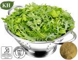 4:1 natural del extracto del Arugula de la alta calidad